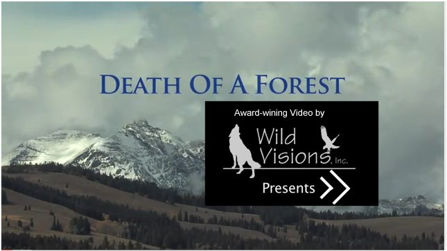 Death of a Forest, View Video