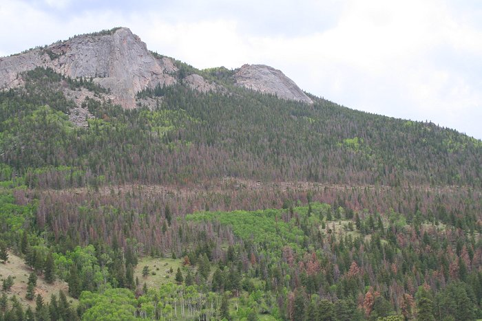 beetle kill in Rocky Mountain National Park