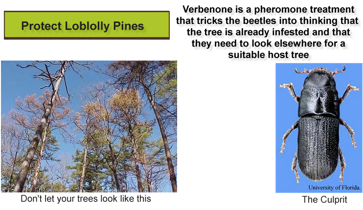 southern pine beetle deterrent
